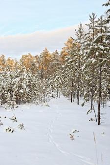 Pegadas de animais na floresta de inverno