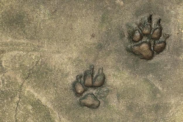 Pegadas de cachorro no chão de cimento