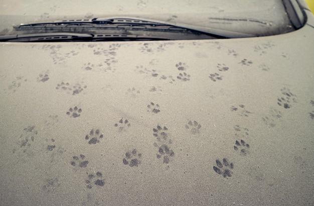 Pegadas de gatos no capô do carro coberto de poeira