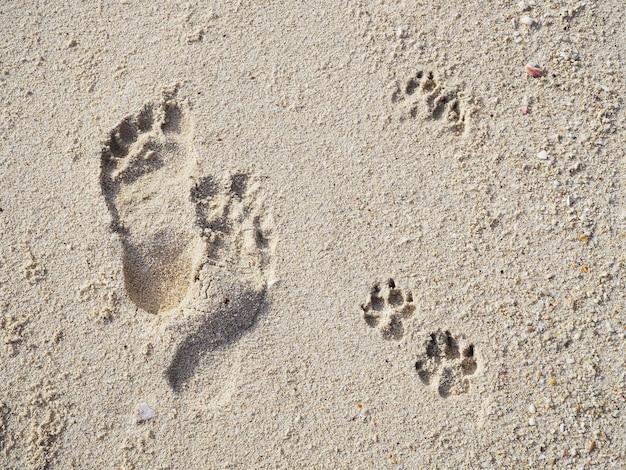 Pegadas de humanos e cães na praia de areia