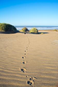 Pegadas de um cachorro na areia de uma praia e ao longe ele mesmo olhando o mar