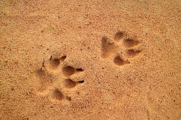 Pegadas do cão na areia dourada, espaço livre para texto e design