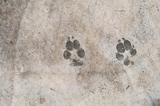 Pegadas do cão no fundo do chão de cimento