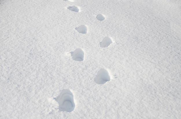 Pegadas humanas na neve branca