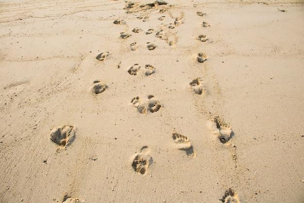 Pegadas na areia bela praia de areia de manhã