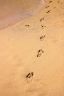 Pegadas na praia, apontando o caminho que alguém tomou