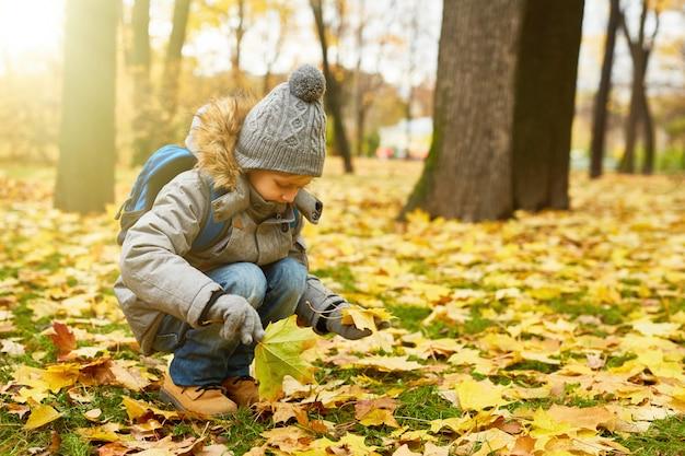 Pegando folhas