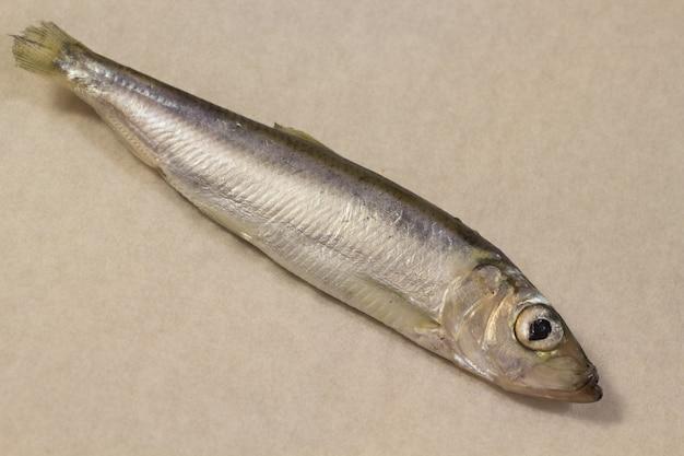Peixe arenque