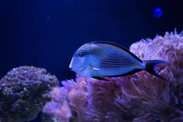 Peixe azul na água escura