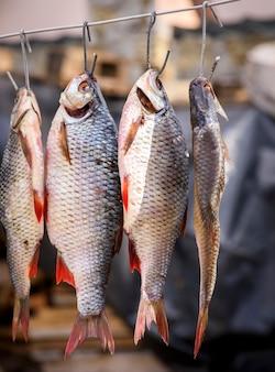 Peixe batendo em balanças penduradas em um gancho de ferro
