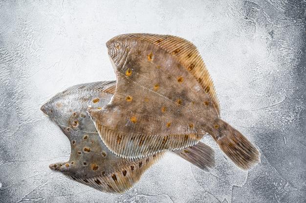 Peixe chato de solha inteiro cru na mesa da cozinha. fundo branco. vista do topo.