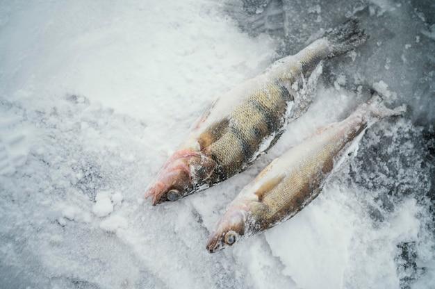 Peixe congelado com neve ao redor