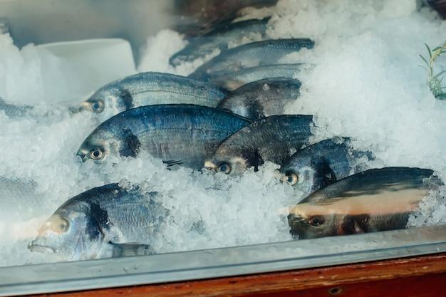 Peixe cru fresco na geladeira com gelo
