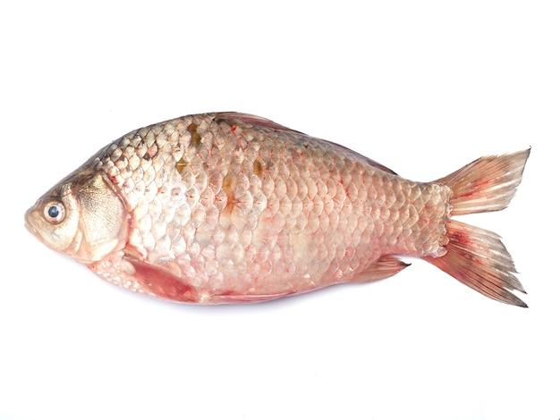 Peixe crucian