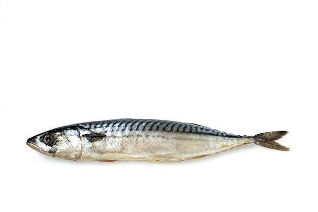 Peixe de cavala isolado
