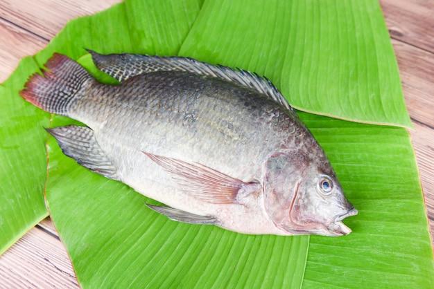 Peixe de tilápia de água doce