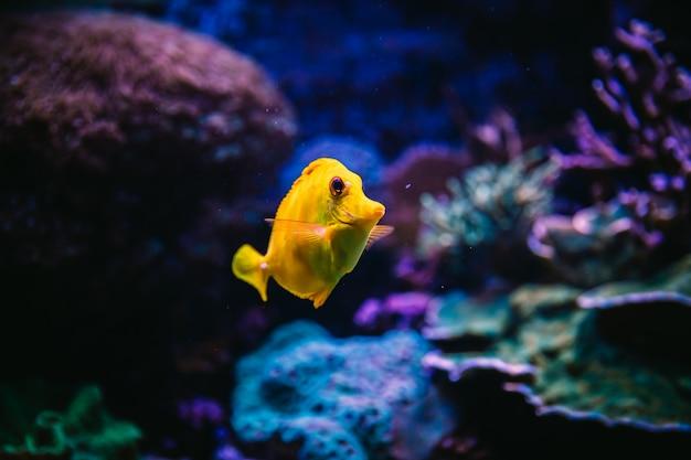 Peixe dentro de um aquário