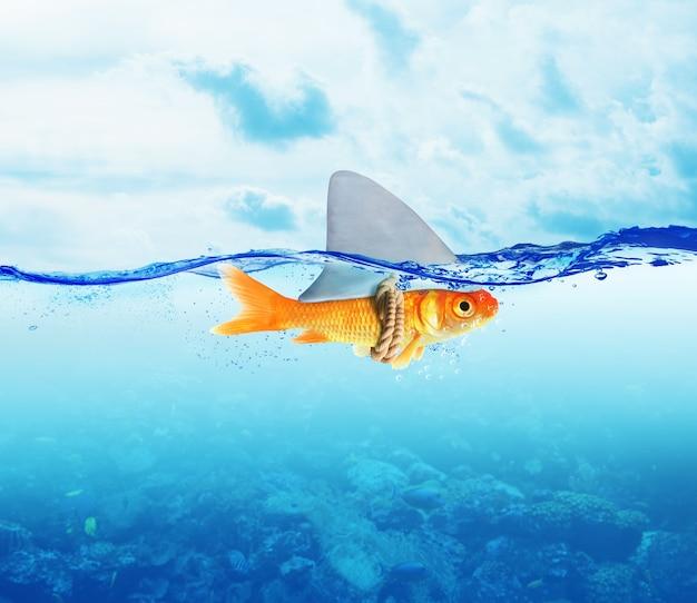 Peixe disfarçado de tubarão no mar