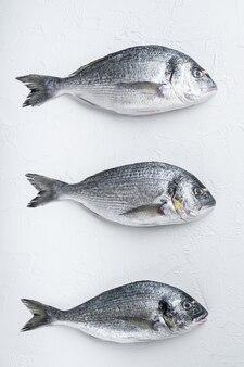 Peixe dourado de três douradas ou douradas de cabeça dourada