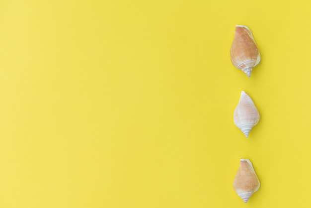 Peixe estrela plana leigos sobre fundo amarelo, vista superior