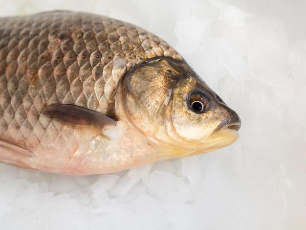 Peixe fresco close-up em cubos de gelo