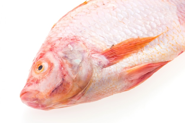 Peixe fresco cru