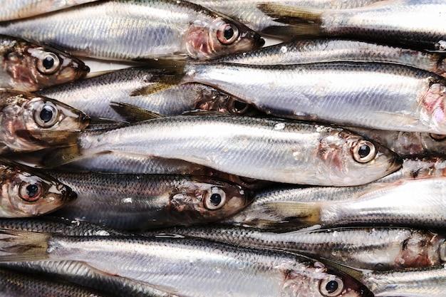 Peixe fresco e delicioso