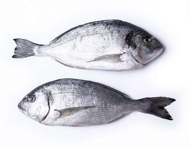 Peixe fresco em branco