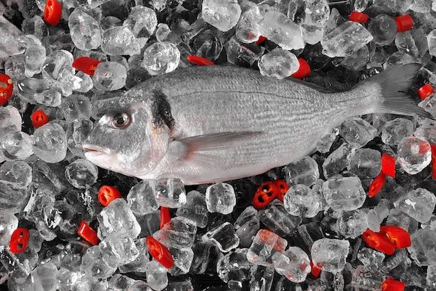 Peixe fresco em cubos de gelo. dorado fresco ou dourada dourada em cubos de gelo e superfície preta