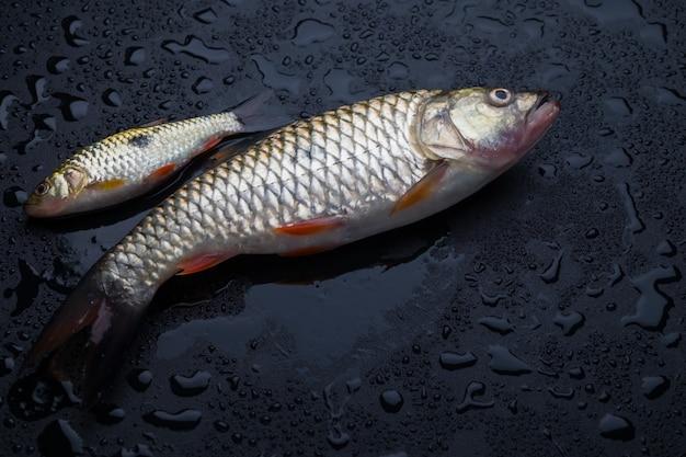Peixe fresco na mesa preta molhada