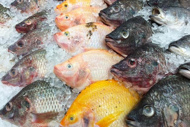 Peixe fresco na prateleira de gelo.