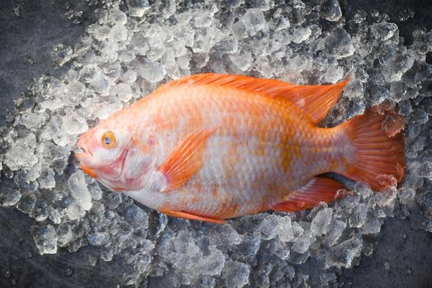 Peixe fresco no gelo no mercado / tilápia peixe cru vermelho sobre fundo preto