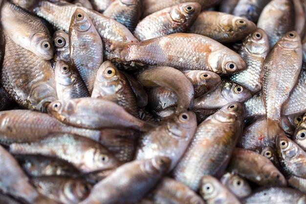Peixe fresco no mercado de produtos frescos ou peixe resfriado em supermercado
