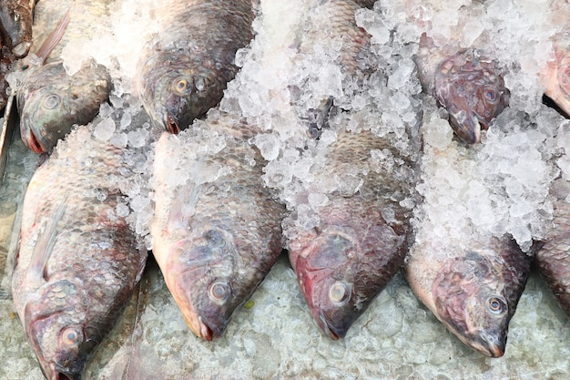 Peixe fresco no mercado