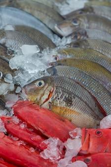 Peixe fresco no mercado