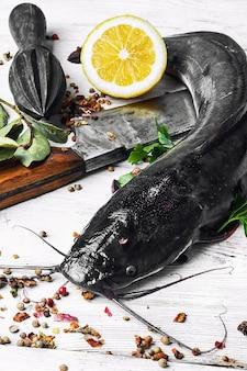 Peixe-gato peixe cru