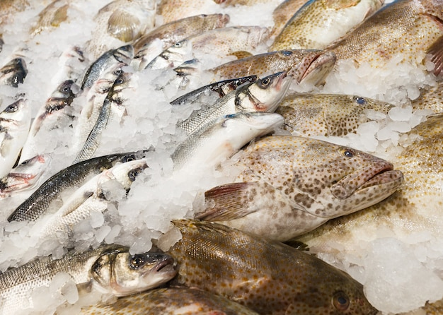 Peixe inteiro cru fresco diferente resfriado no gelo, no mercado de peixes.