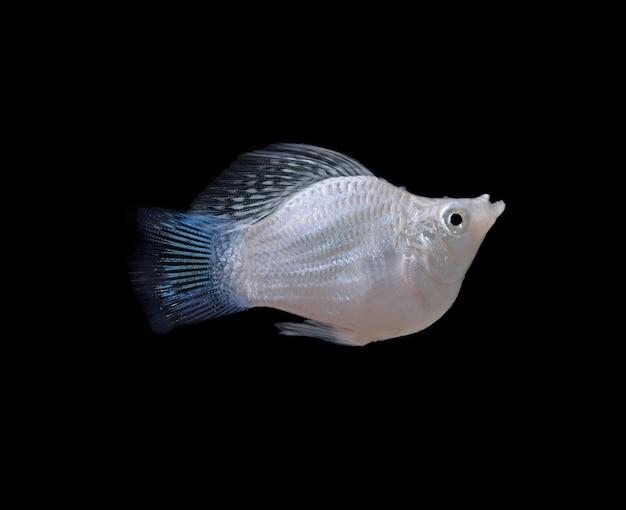 Peixe isolado em fundo preto.