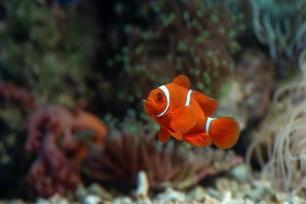 Peixe marinho com lindas cores