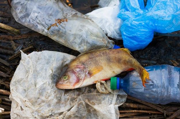 Peixe morto com lixo plástico no oceano. conceito para a proteção da vida marinha e dos oceanos.