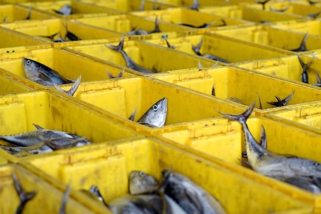 Peixe na cesta
