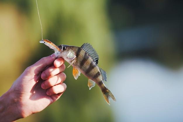 Peixe na mão do pescador