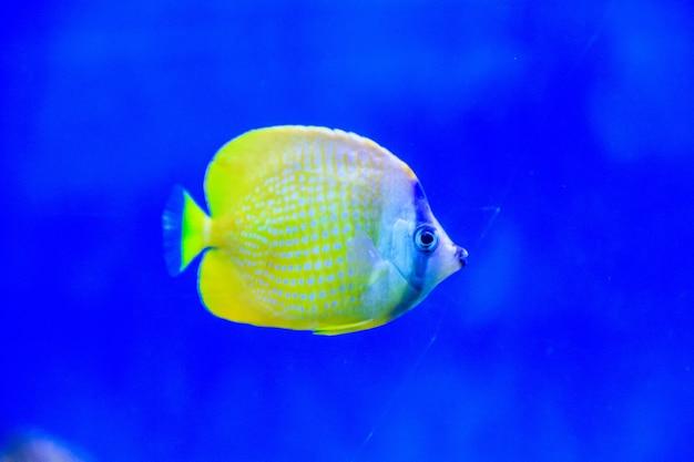 Peixe nada no aquário do zoológico