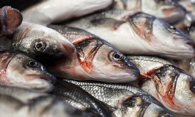 Peixe no gelo, fresco cru inteiro e refrigerado, no mercado de peixes