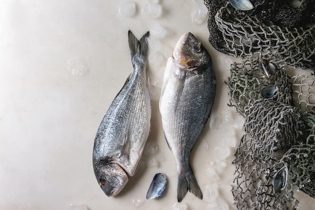 Peixe pargo cru