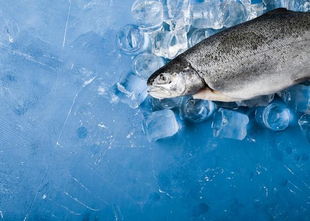Peixe plano com cubos de gelo