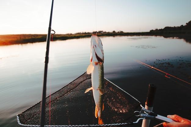 Peixe preso na rede de pesca sobre o lago idílico