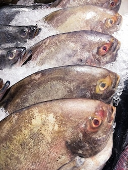 Peixe preto pomfret