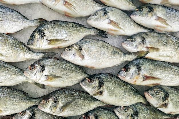 Peixe refrigerado fresco em linhas no gelo em uma loja. ingrediente útil dietético para o jantar, uma vitrine em um restaurante de peixe.
