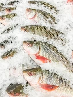 Peixe rohu fresco